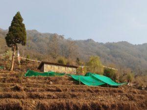 Mamerku Farm House